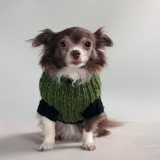 tweed emerald dog coat