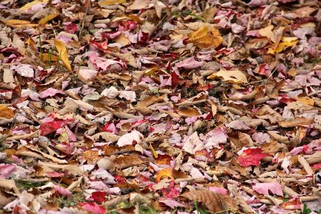 Bed of Leaves