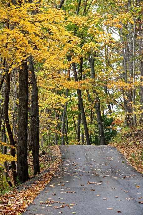 Cropped Fall Road