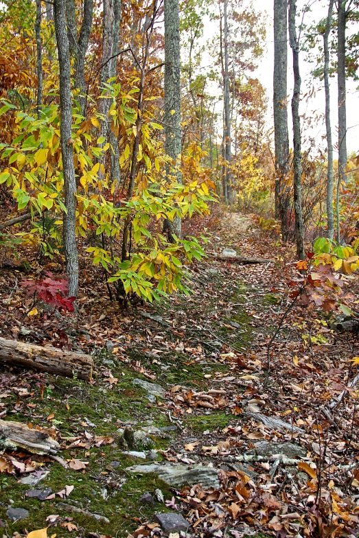 Forest Path_2