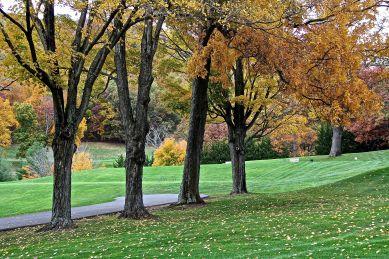 Four Trees Close